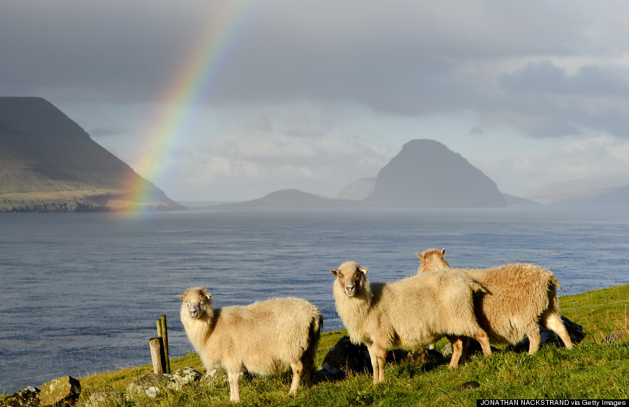 Sheep are pictured at the Kirkjubour village on the Streymoy Island as a rainbow appears between the Hestur (L) and the Koltur (R) islands on October 16, 2012, Faroe Islands. The Faroe Islands are known for its fishing and sheep farming as the main industries. AFP PHOTO / JONATHAN NACKSTRAND (Photo credit should read JONATHAN NACKSTRAND/AFP/Getty Images)