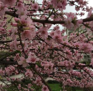Gezinirken Öğrendiklerim, Sakuralar, Gezgin Bir Türk Kadını ve Başka Şeyler